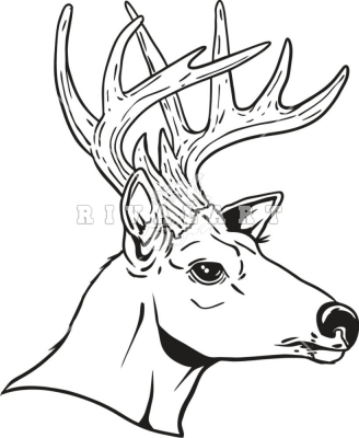 Entry16822 moreover 177410653 besides Mallards Cupped Decal P5533 together with Outline Pictures Of Animals For Colouring in addition Veado Veado Cervato Cor C3 A7a Silhuetas 15799051. on deer hunting clipart