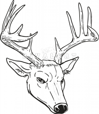 Reindeer head drawing - photo#10