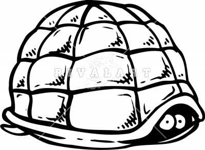 Turtle Shell Empty Turtle Shell Drawing