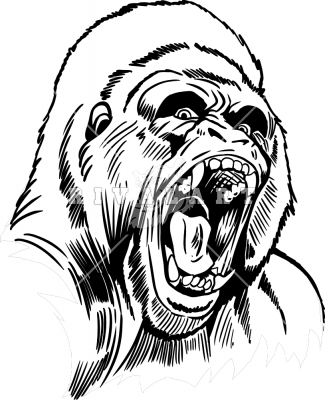 Angry Gorilla Head Drawing - photo#23